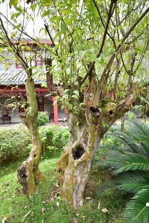 Hezhou, จีน: 庭園景色