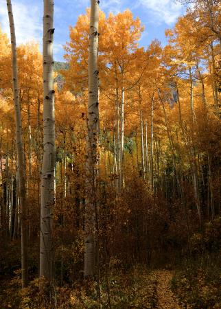 Sylvan Lake State Park Campground: Aspens on Sneeve Gulch trail