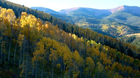 Eagle, CO: Morning light on aspens