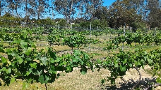 Coward and Black Winery - Margaret River Cellar Door