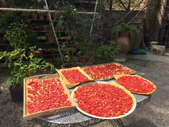 Agriturismo Piaggione di Serravalle: Pommodoro