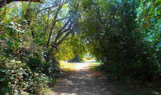 Annadel State Park: trail