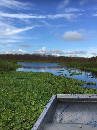 Camp Holly Fishing & Airboats: Swamps