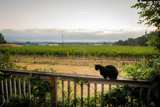The view from our vineyard guesthouse in Hopland