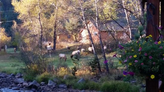 Paradise on the River: And the rest of the elk family!