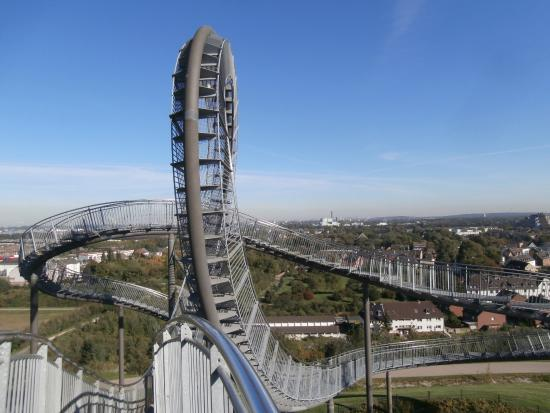Loop Picture Of Tiger Turtle Magic Mountain