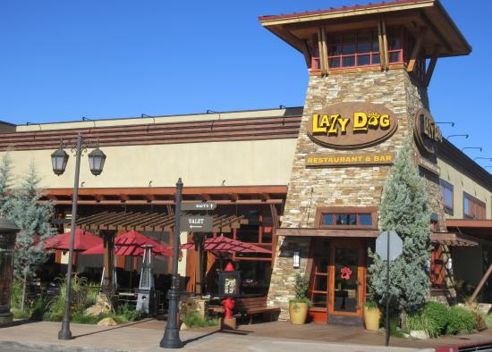 Lazy Dog Cafe Reviews