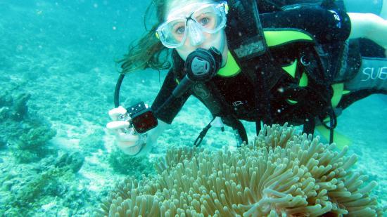 Diving sipadan picture of sipadan national park - Sipadan dive centre ...