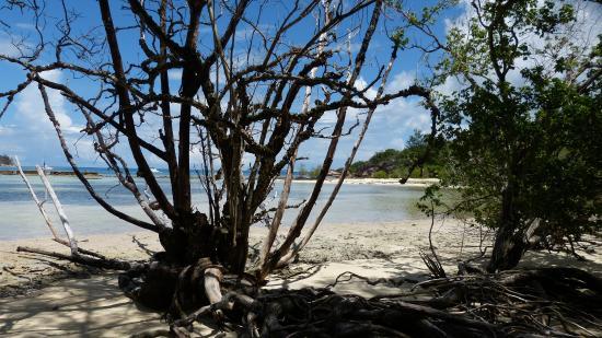 Praslin Island, Seychellerne: ile curieuse