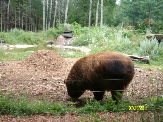 Ely, MN: Honey Bear