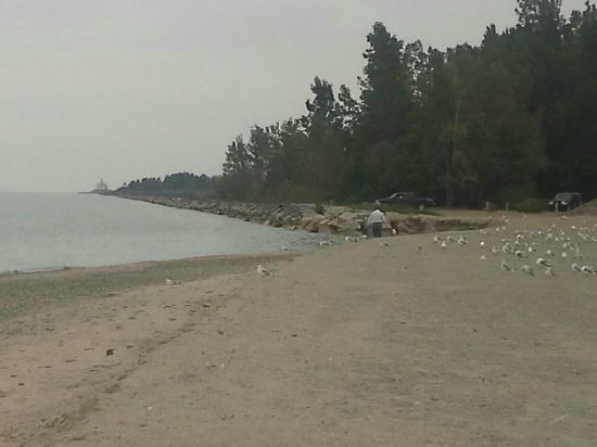 Walnut Beach: Rocky shoreline