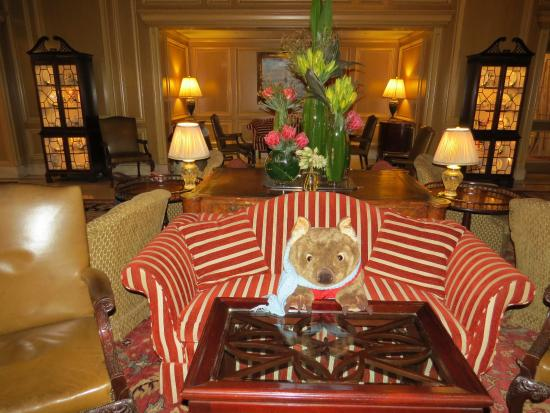 Sir Stamford at Circular Quay Hotel Sydney: Sir Stamford at Circular Quay (Aug 2015) - Morris the wombat concierge!