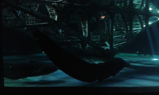 silure foto di grand aquarium de touraine lussault sur loire tripadvisor