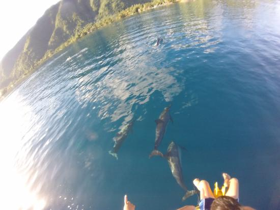 Teahupoo Adventure Tours and Surf: rencontre des dauphins