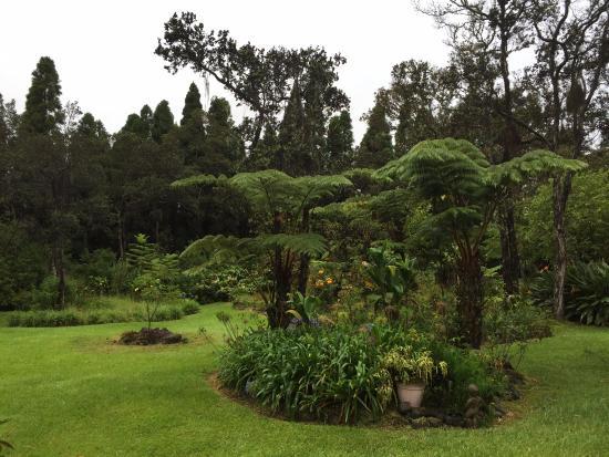 My Island Inn: Garden