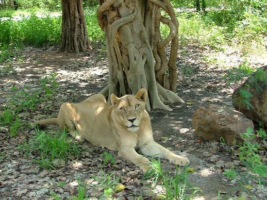 เมืองกาญจนบุรี - Picture of Safari Park Open Zoo, Kanchanaburi - TripAdvisor