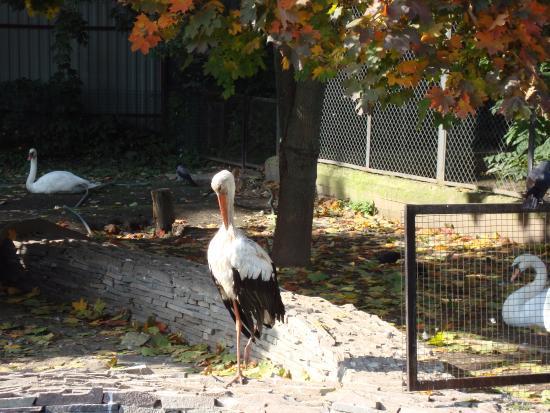 Ivanovo Zoo