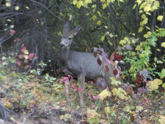 พาโนรามา, แคนาดา: Wildlife along the way.