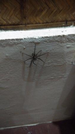 Snehadhara Homestay: Spider