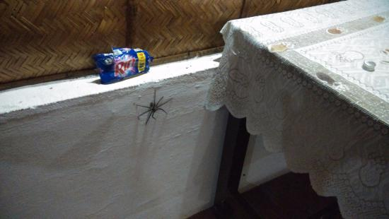 Snehadhara Homestay: see spider, big one