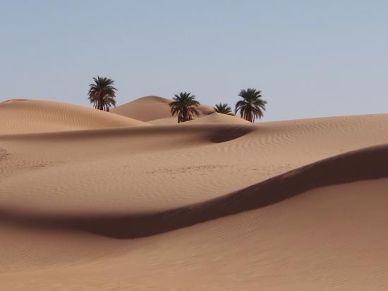 Laghouat Province, Algeria: deserto