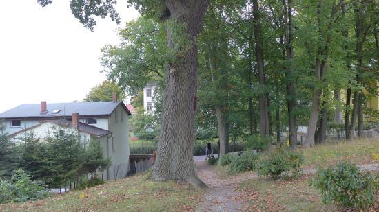 Hotel Weisses Schloss : hotel garden