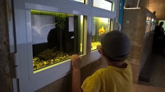 The Aquarium and the Black Sea Museum: Вот такие аквариумы