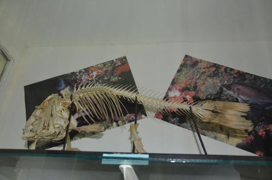 The Aquarium and the Black Sea Museum: Скелет рыбы