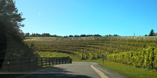 The Inn at Black Star Farms: Vineyards along the drive from the road to the Inn