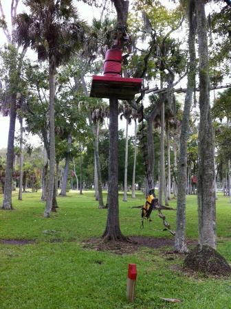 Tuscawilla Park More Zipline