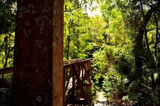 Suspension Bridge Picture Of Ravine Gardens State Park Palatka Tripadvisor