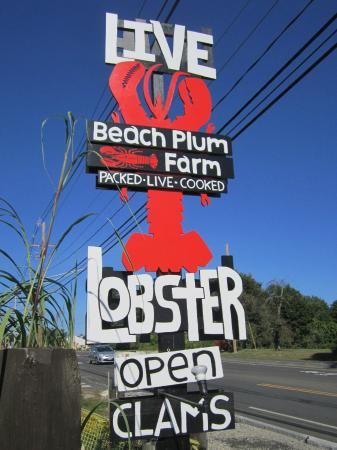 Beach Plum Lobster Farm