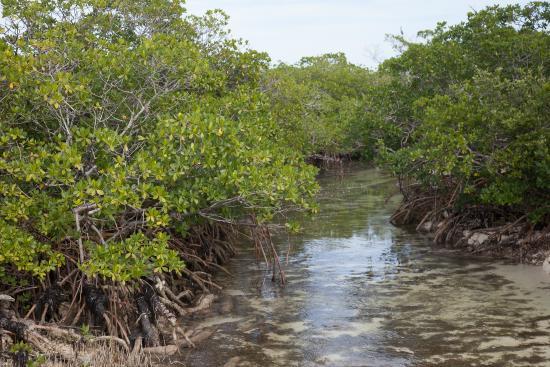Abaco Islands: inlet, Cherokee, Abaco