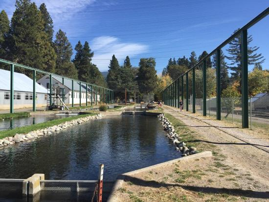 ‪Mount Shasta Fish Hatchery‬