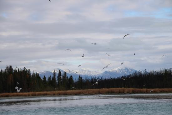 Chugach Backcountry Fishing - Day Trips: Birds Abound