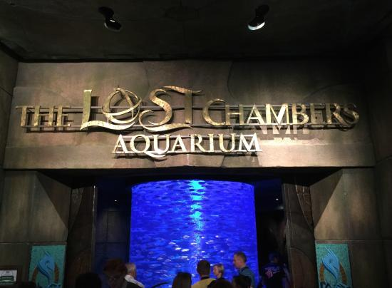 lost chamber - Picture of The Lost Chambers Aquarium, Dubai ...
