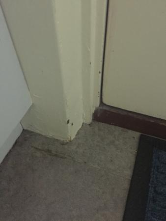 Broadwater Beach Resort Busselton: More damage and bugs - at least you get company in every room...