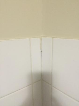 Broadwater Beach Resort Busselton: Sharing the room with one of many permanent guests...