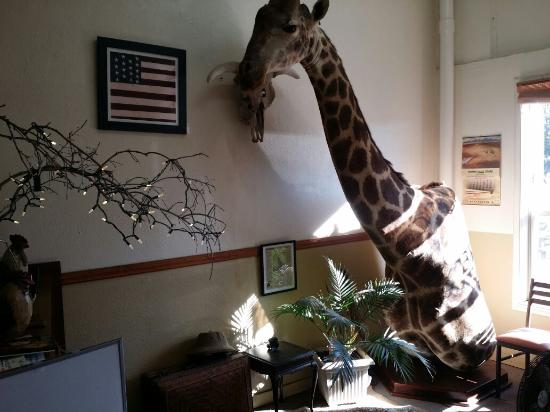 Dorris, Kalifornien: Slice of Heaven indeed. Complete with an eclectic decor... which includes a stuffed  Giraffe...