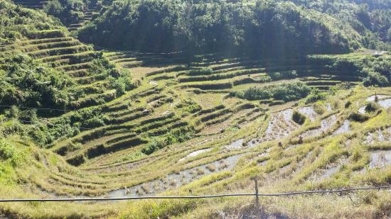 Bontoc, Филиппины: Maligcong Rice Terraces