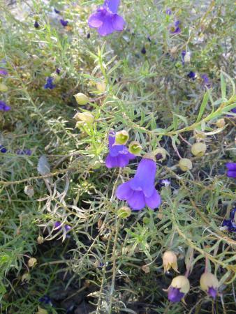 Garden flower picture of olive pink botanic garden - Olive garden colorado springs co ...