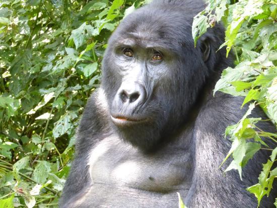 Gorillas and Wildlife Safaris - Day Tours: Bwindi National Park