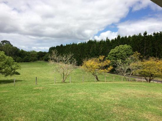 Attunga Park Country Retreat : View from veranda