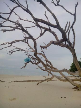 Balabac, Filipinler: the beauty of a dead tree