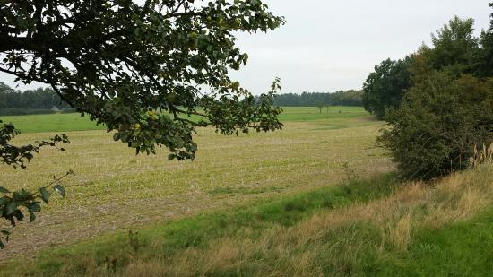 Umgebung von Wermsdorf /Sachsen