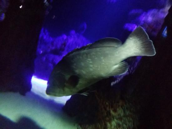 Balıklar - Akvaryum Dunyasi, Eskişehir Resmi - TripAdvisor