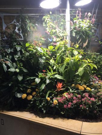 Smithsonian Butterfly Habitat Garden