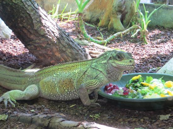 Animaux 6 picture of menagerie du jardin des plantes for Animalerie du jardin des plantes