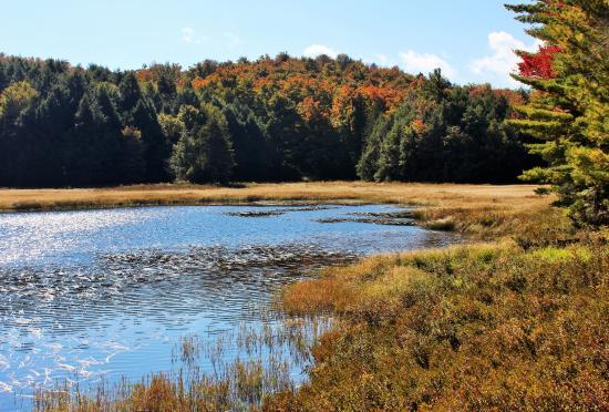 Black Mountain Loop: Black Mountain Pond