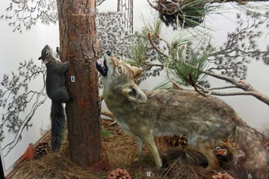 Idyllwild Nature Center:  diorama of local wildlife